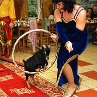 Большое шоу с животными