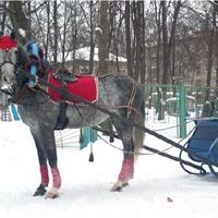 Пони и лошади на праздник
